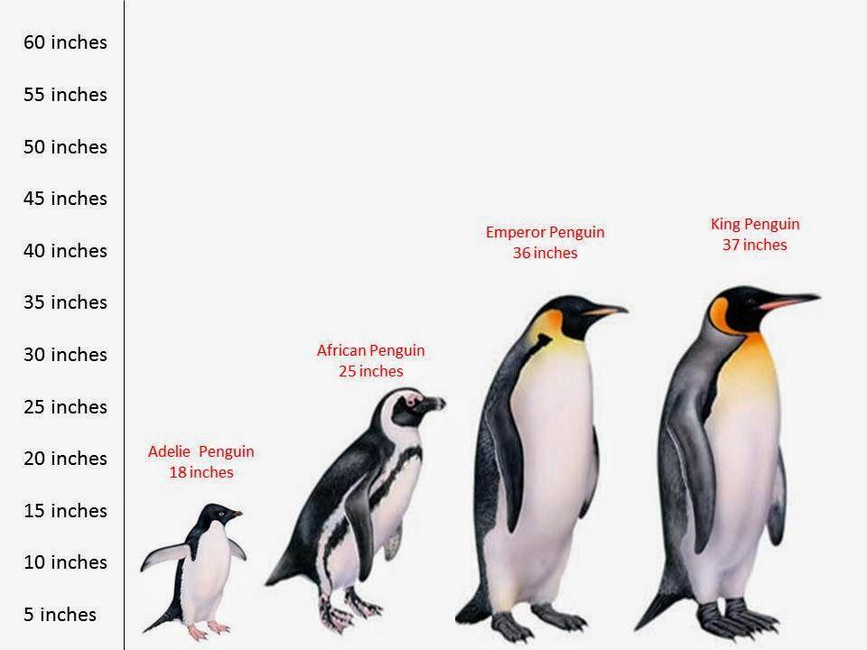 Information About Penguins General Information Penguins Winter Animals Penguin Activities