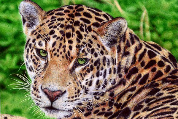 Jaguar - Ballpoint Pen by VianaArts (print image)