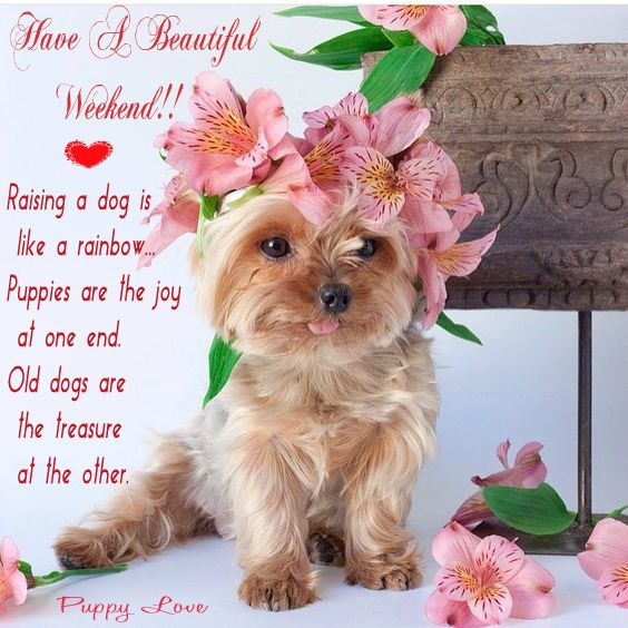 Pin By Mily On Animals Greetings Pinterest