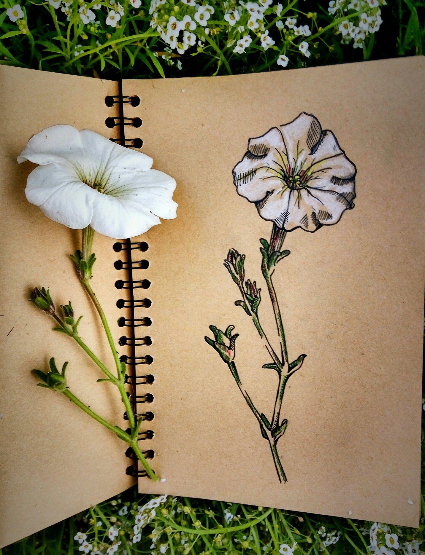 Ink sketch of flower my art pinterest sketches