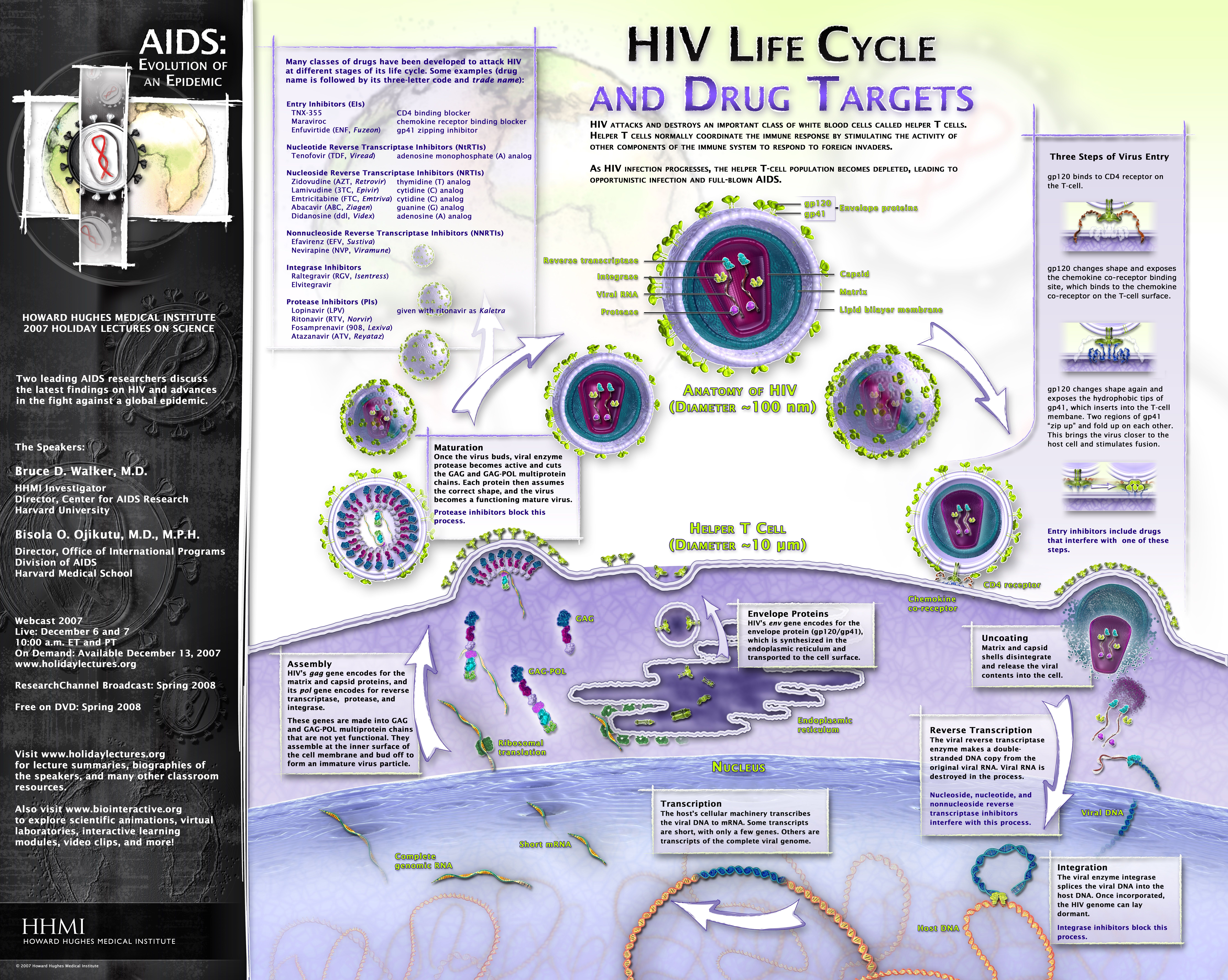HIV Life Cycle and Drug Targets Poster/Graphic - AIDS: Evolution of ...