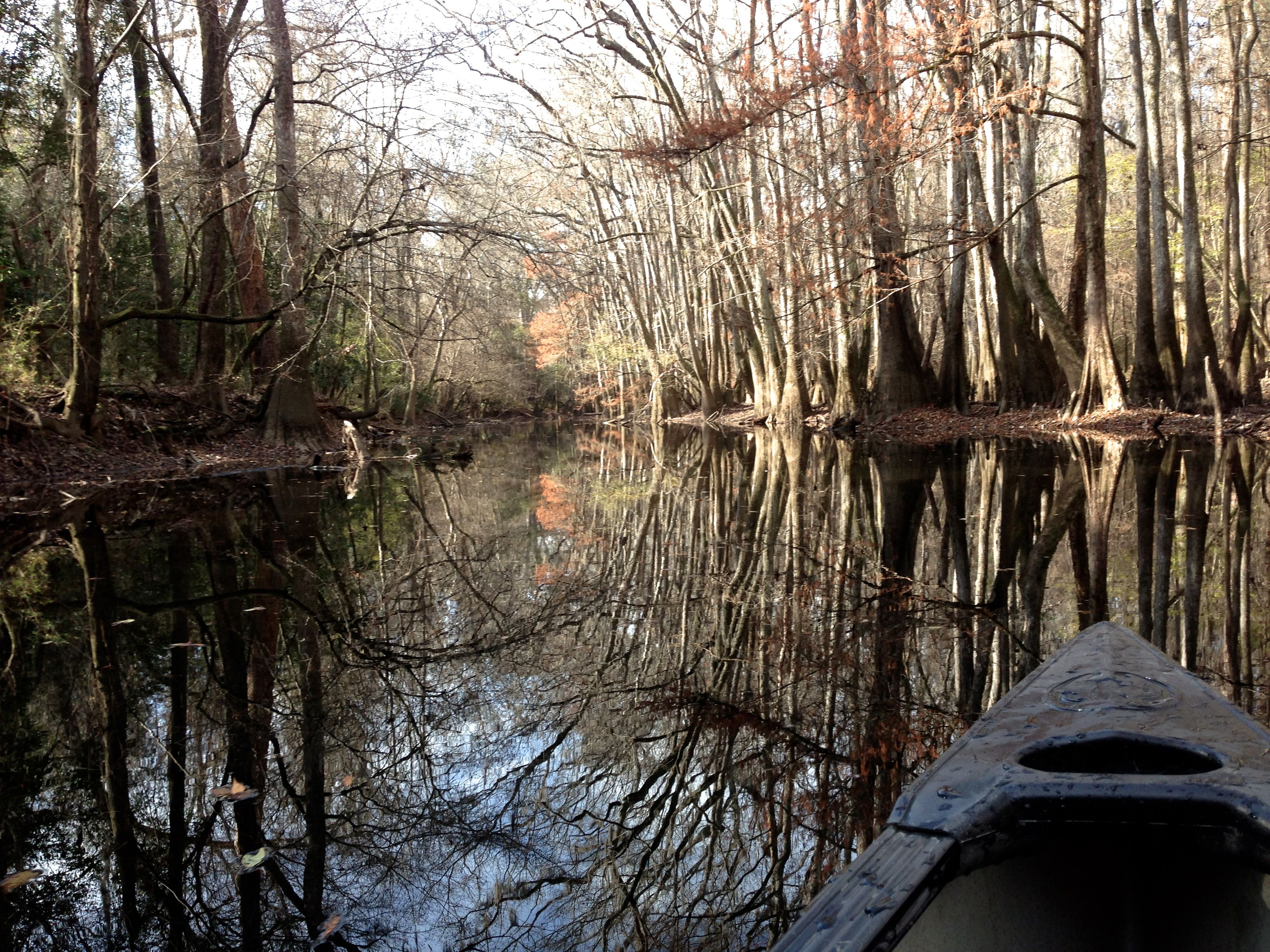 Blackwater reflecting cypress and tupelo | Congaree National Park | NPS | TripCrushBlog #tripcrush