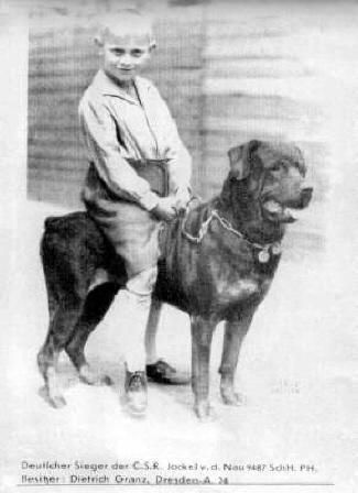 Rottweiler Germany 1920 Rottweiler Love Rottweiler Dog Dog Love