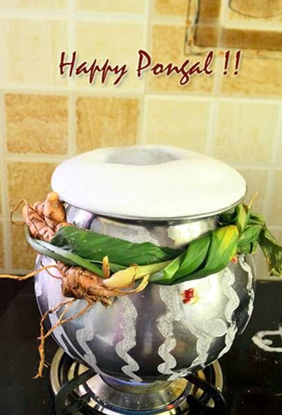 Happy pongal festival greetings cards hd wallpapers pinterest happy pongal festival greetings cards m4hsunfo