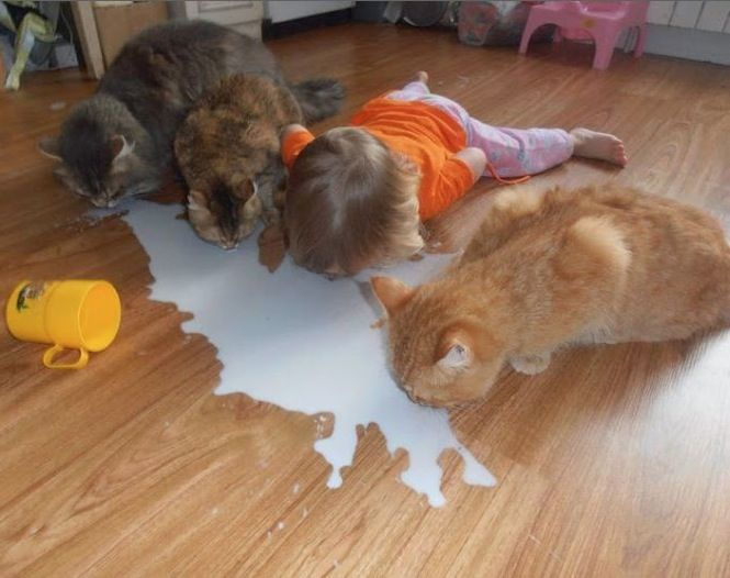Don T Cry Over Spilled Milk Lick It Up With Cats Baby Drinks Milk Off Floor Best Hilarious Jokes Funny Pictures Walm Animals For Kids Funny Animals Pets