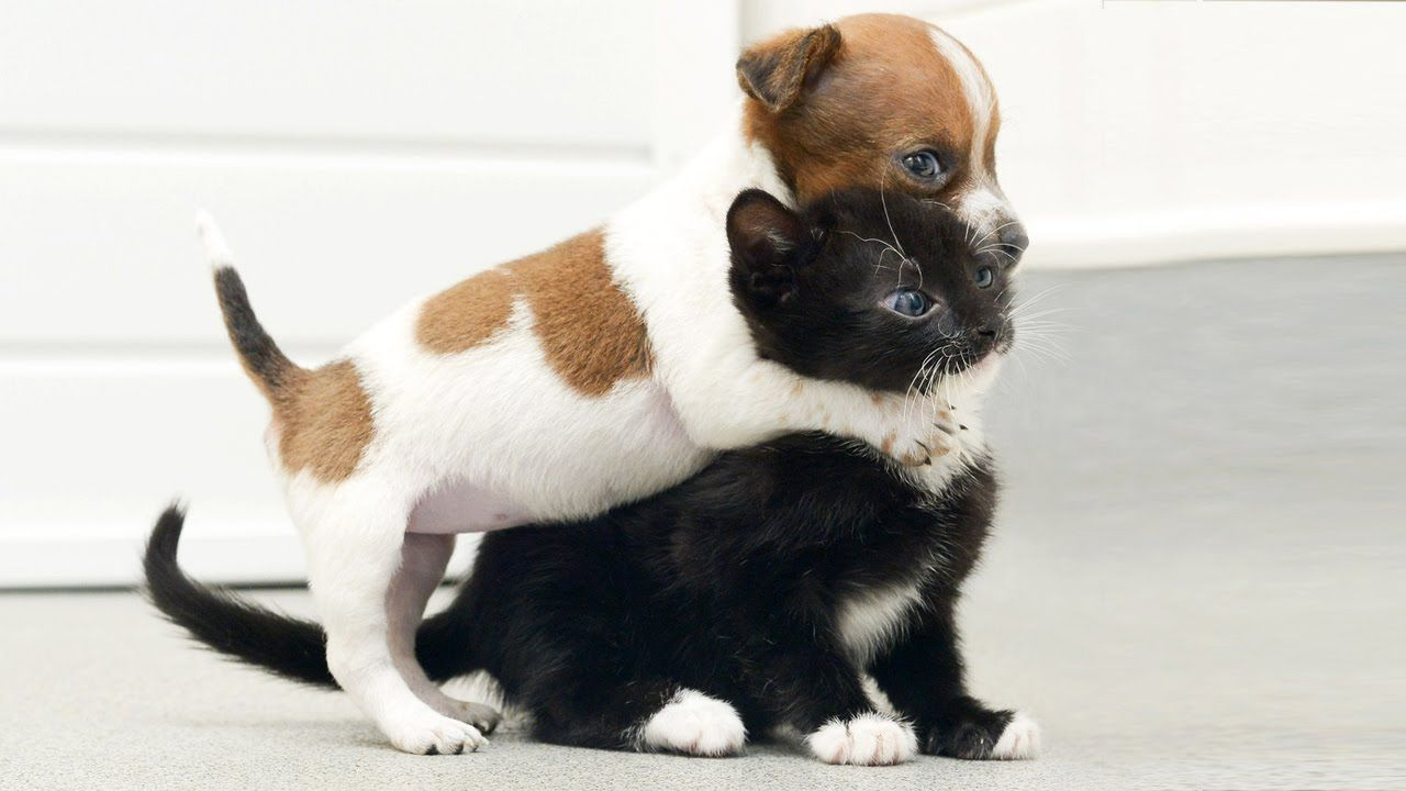 Video Happy National Puppy Day Cats Meeting Puppies For First Time Cute Animals Kittens And Puppies Baby Animals