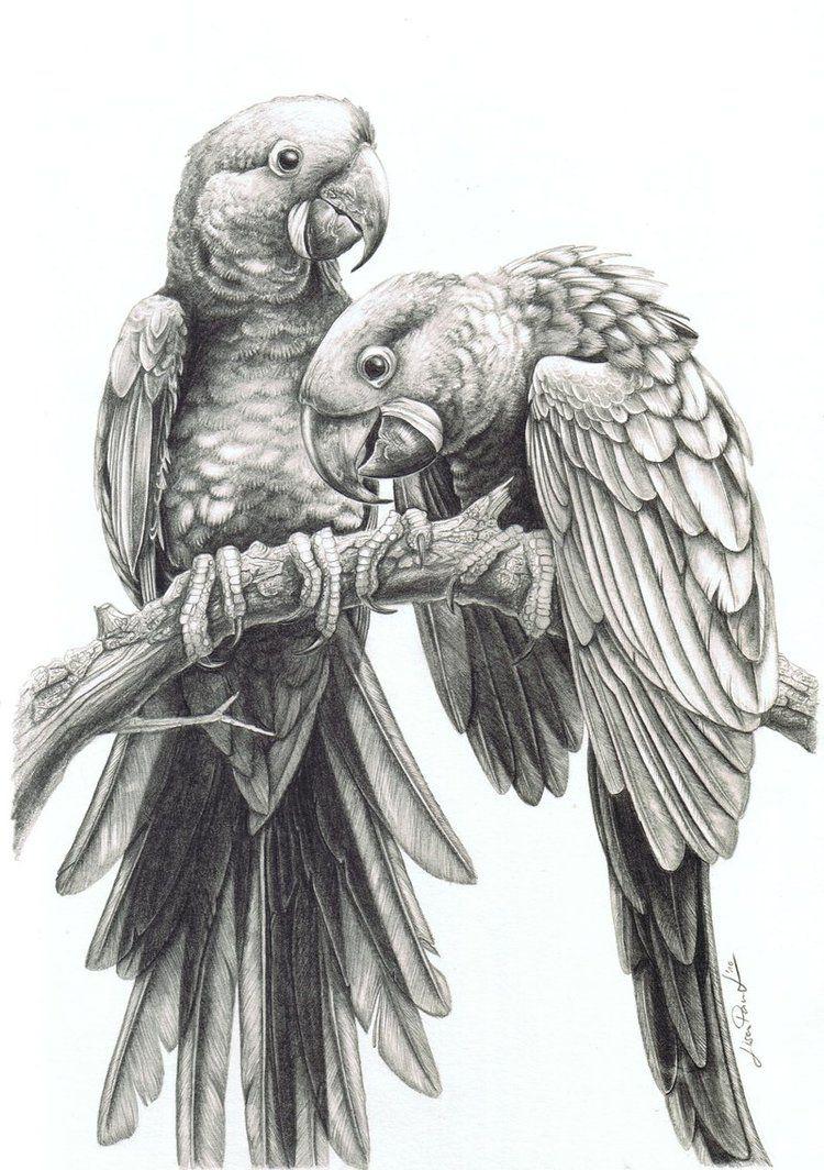 Parrot Drawing Recherche Google Pencil Drawings Of Animals Cool Pencil Drawings Bird Drawings