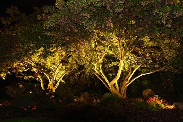 Uplight Trees Around Perimeter Of Reception Area Cancel