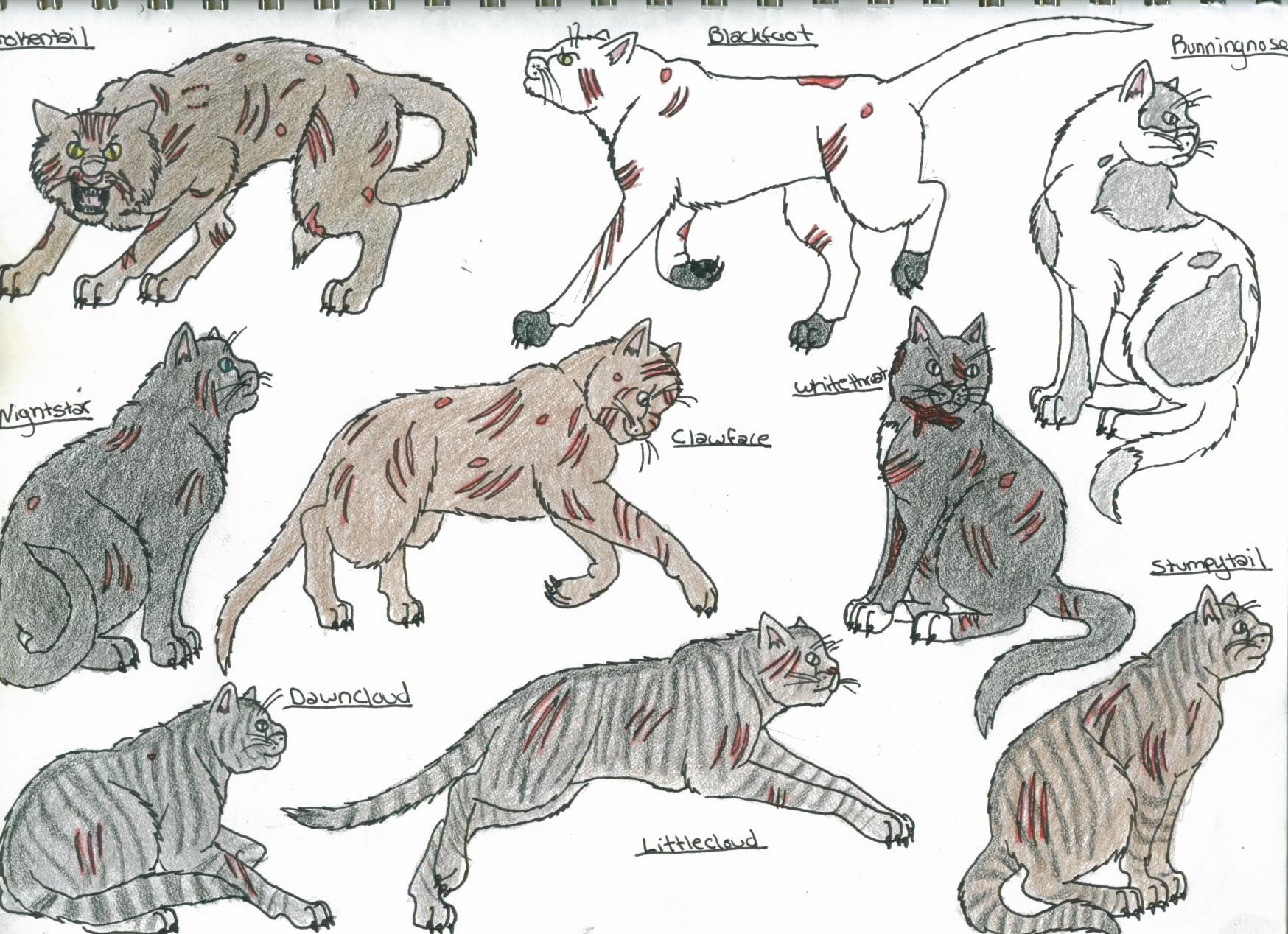 cats of Shadowclan WARRIORS Pinterest Cat and