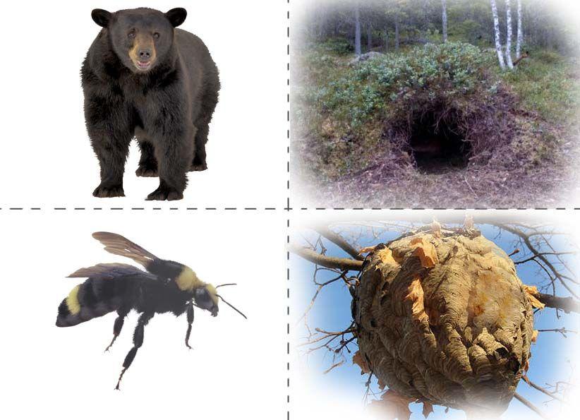 картинки и иллюстрации с изображением жилища животных можно самому