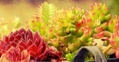 Fitodepurazione: le specie vegetali ed i sistemi costruttivi | EcoProspettive