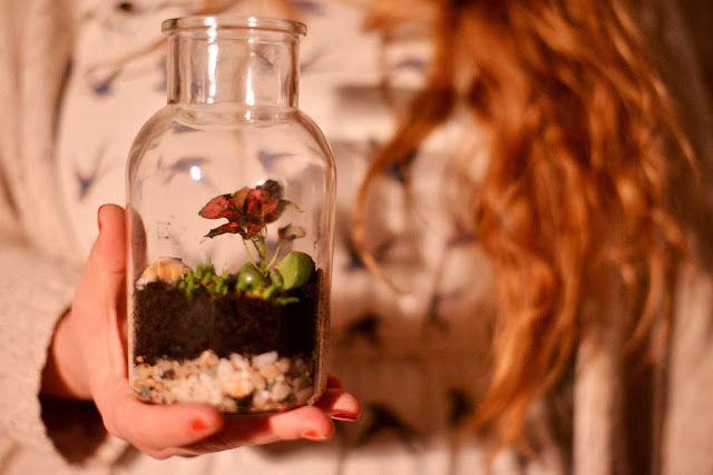 flaschengarten diy kosystem glas zum verschenken von. Black Bedroom Furniture Sets. Home Design Ideas