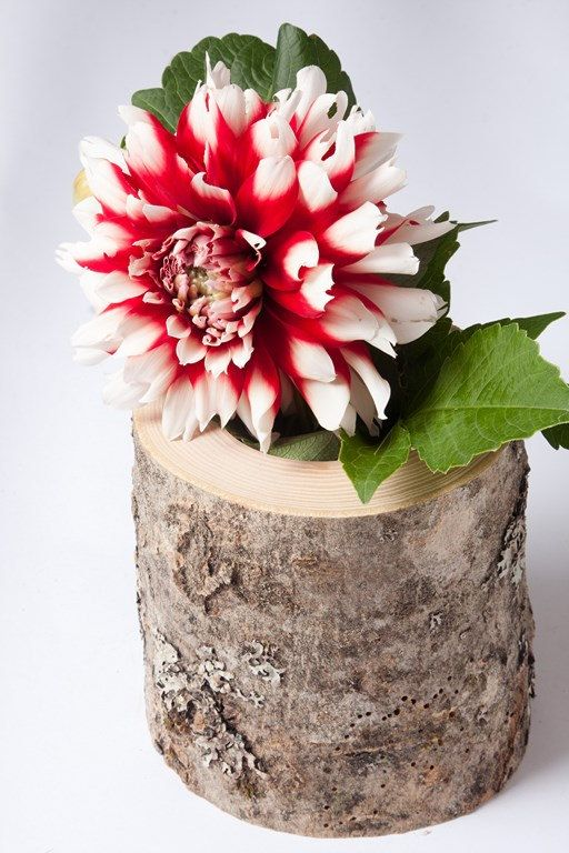 Hey, I found this really awesome Etsy listing at https://www.etsy.com/listing/204964849/rustic-weeding-vase-wooden-vase-flower