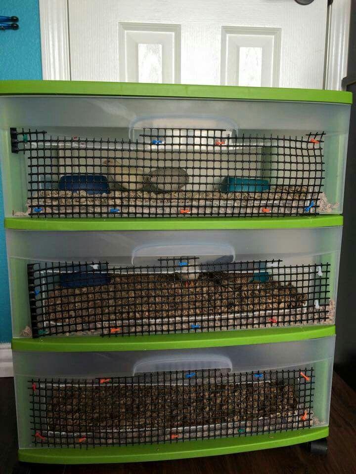 Button quail housing codornices troncos conejos animales criadero de codorniz huevos also phesents pinterest aves rh ar