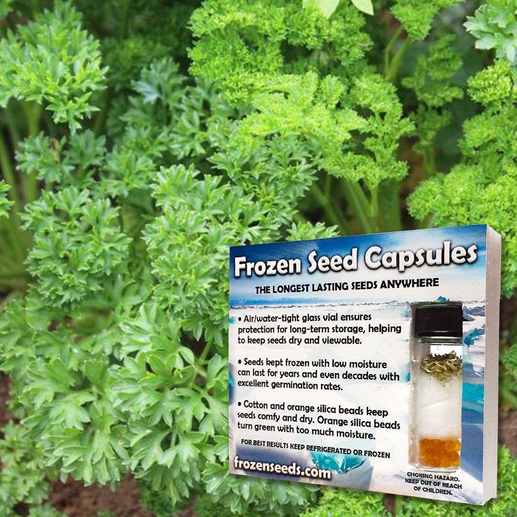 Mosscurled Parsley Seeds (Petroselinum crispum crispum) + FREE Bonus 6 Variety Seed Pack - a $30 Value!