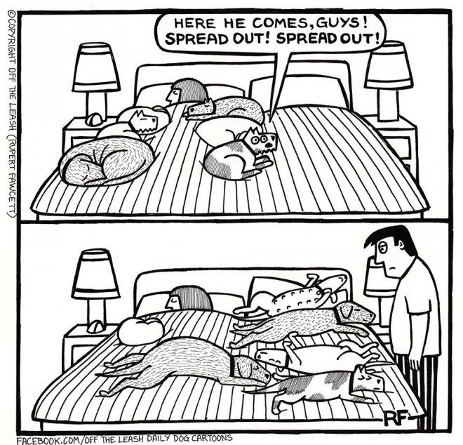 Off The Leash Dog Cartoons Rupert Fawcett Time For Bed
