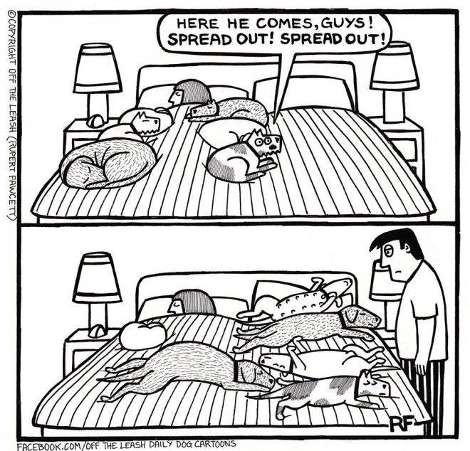 Rupert Fawcett Time For Bed