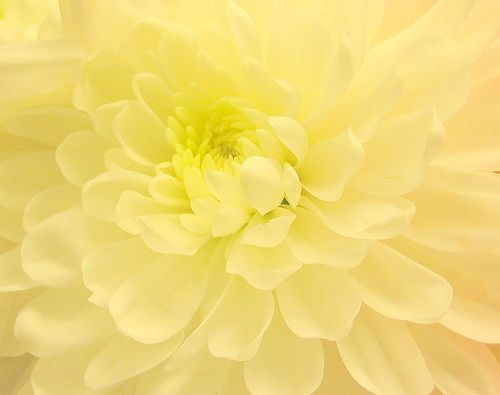 Yellow Shades pastel yellow | ❤ yellow ~ mellow ❤ | pinterest | pastel yellow