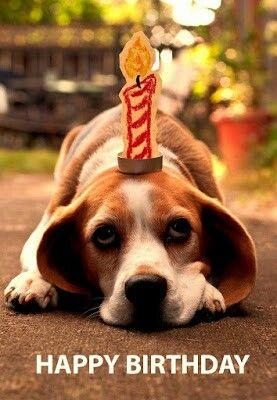 happy birthday beagle Pin by Joni Roberts on Happy Birthday!   Beagle, Dogs, Puppies happy birthday beagle