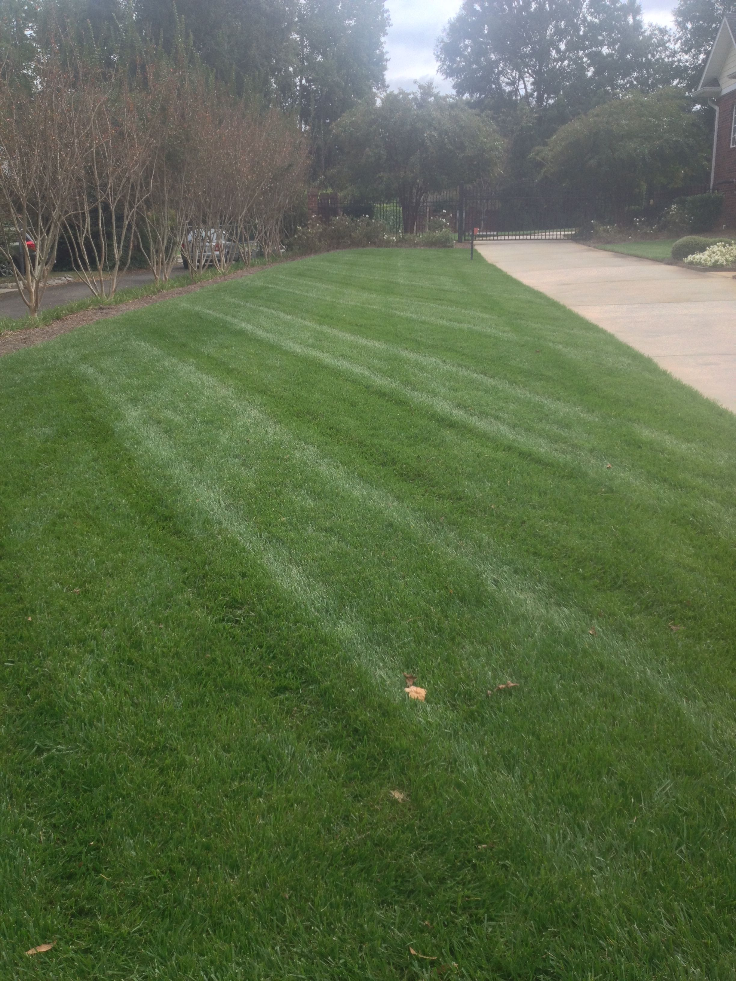 Aeration Seeding Watering Leaf Removal It Is All Very Important When Growing A Fescue Lawn In The South Fescue Lawn Landscape Lawn