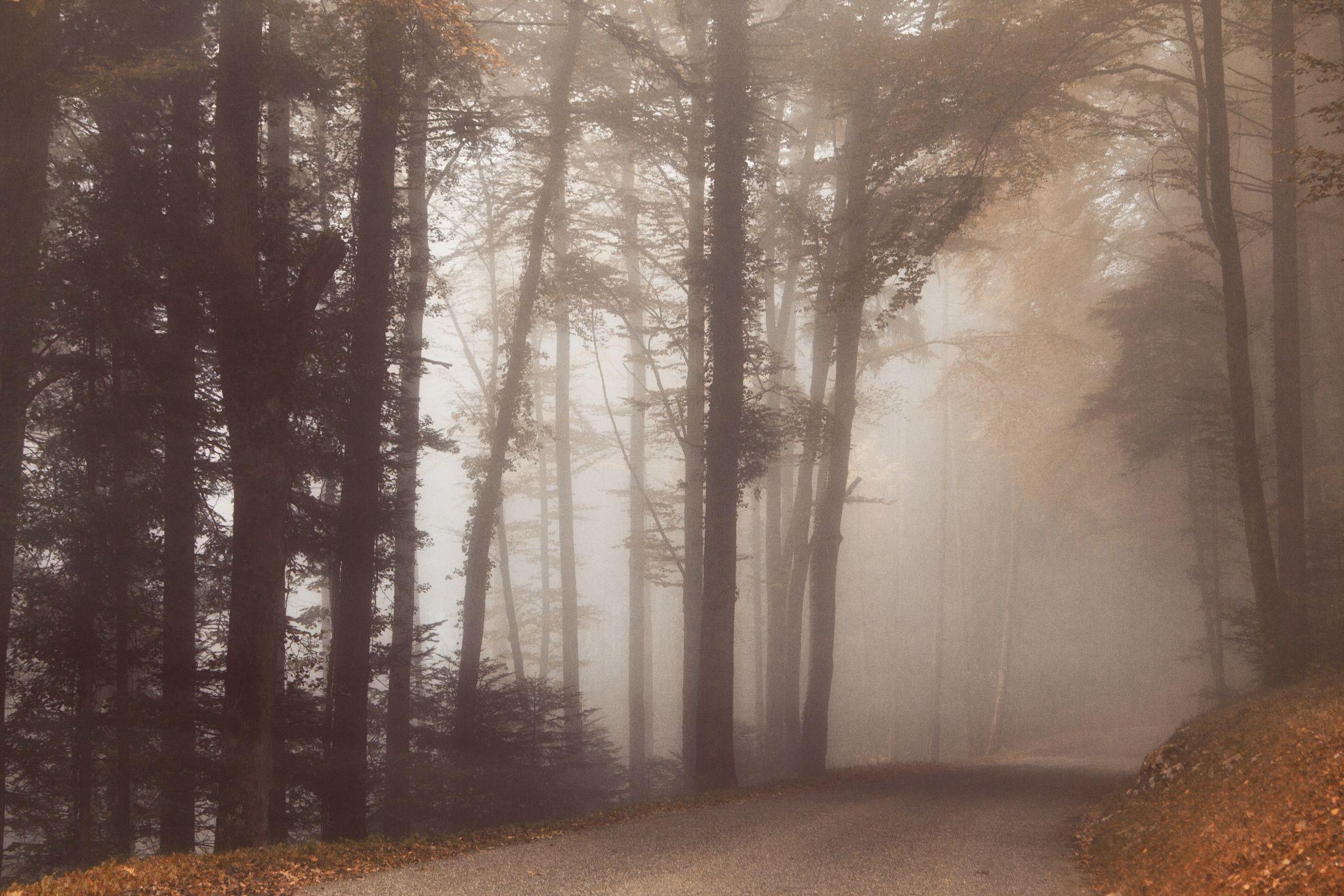 balade par temps de brouillard à Montvoie