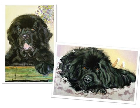Bella & Our Harvey Blank Note Cards
