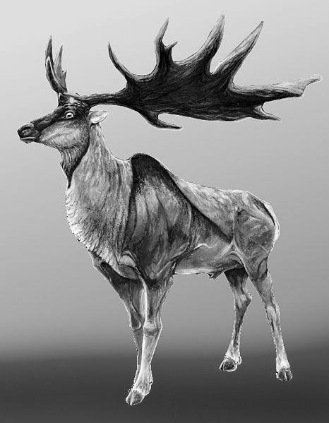 Pin On Irish Elk