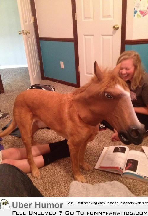 So I put my horse mask on my dog…