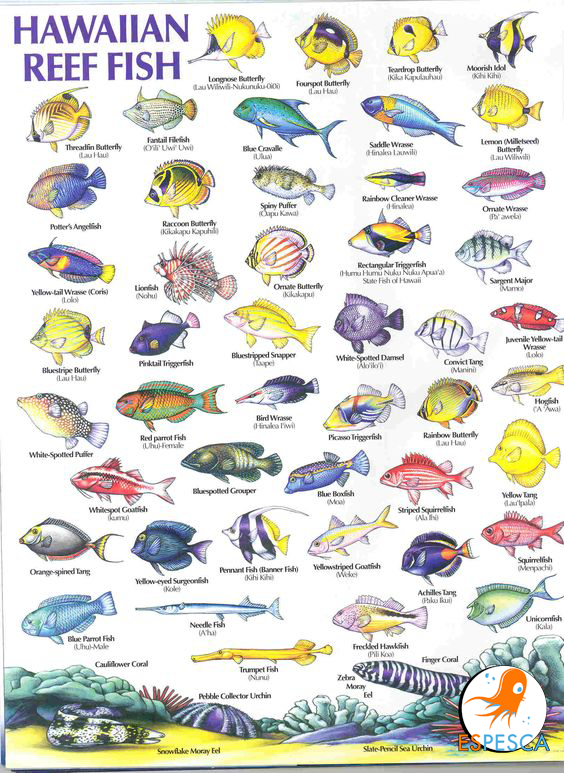 The Total Guide to Tropical Fish: | Freshwater Fish | Pinterest ...