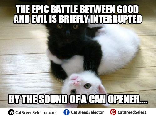 Evil Cat Memes Cat Hug Kittens Cutest Cute Animals