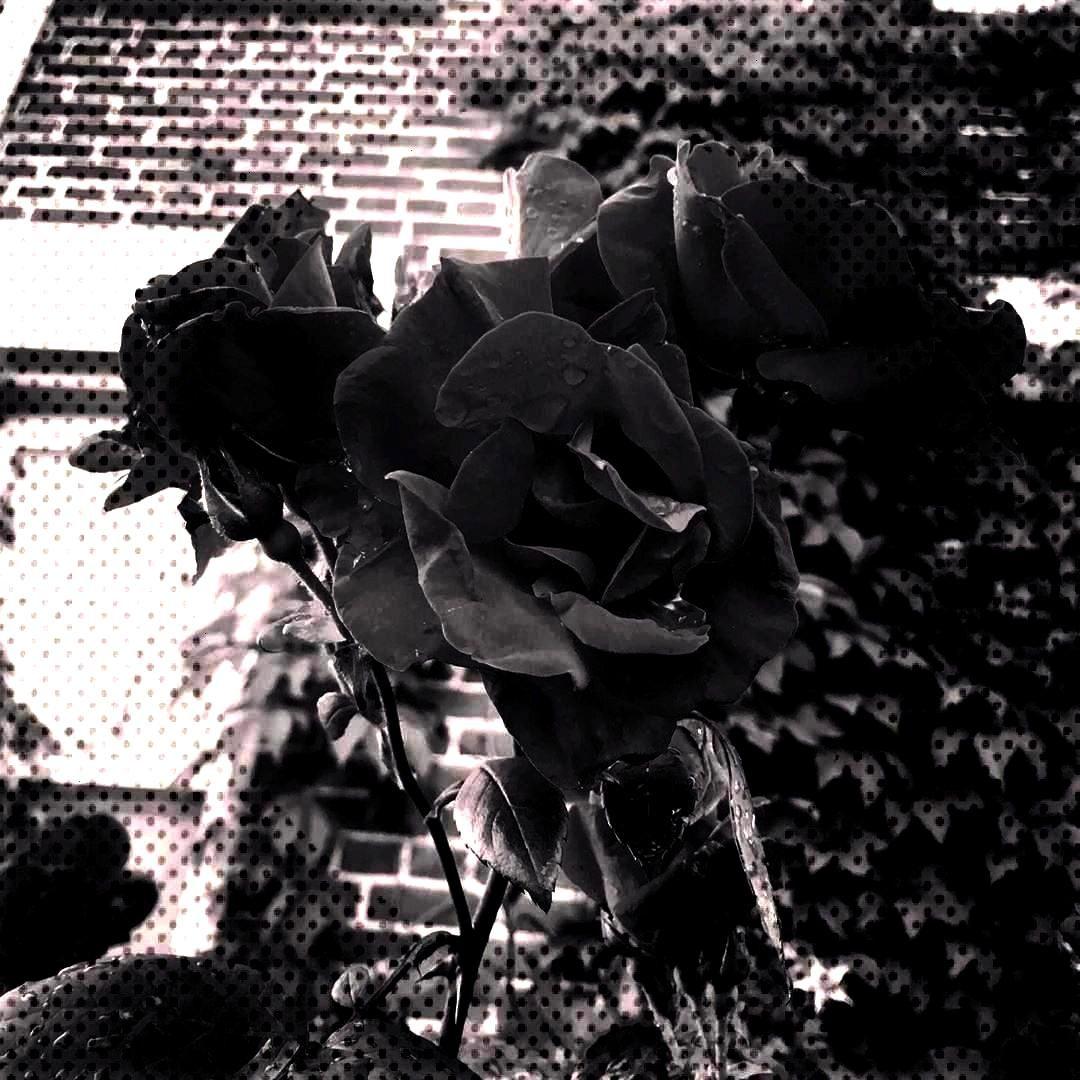 - - - - - - -Bed of thorns - - - - - - -of thorns - - - - - - -Bed of...of thorns - - - - - - -Bed