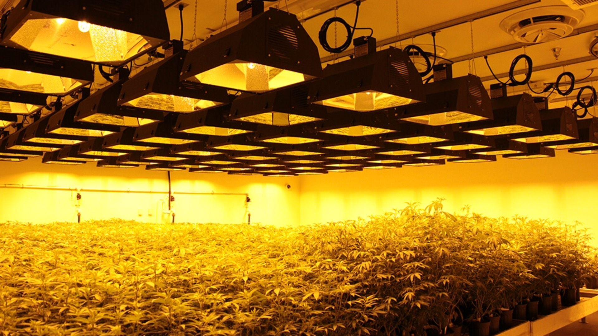 Growlite fixtures from Barrron Lighting.   #growlite #barronlighting #growlight #horticulture #hydroponics #oghood #growpatrol #growfacilities #oghood #sparky #electrician #lighting #themachine #extreme #willowelectric #karma #willowelectrical #growlitebybarron #hydrolife #cleanmeds #growops #growshop #hydrostore #grow #horticulture #garden #urbanfarmer