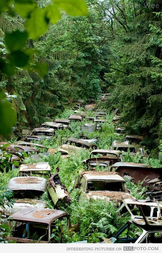 Abandoned cars from WWII, Ardennes