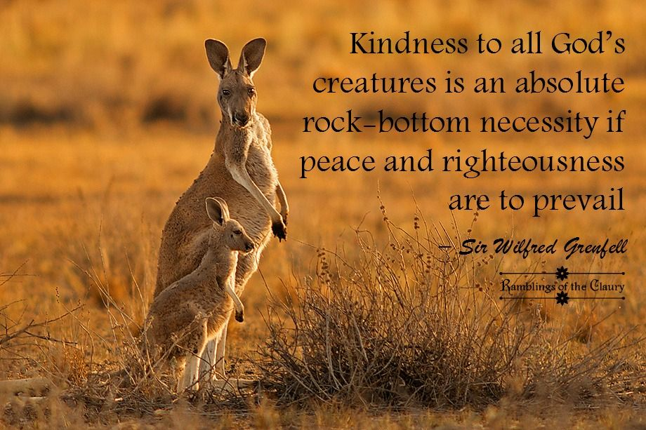 Kindness to all God's creatures is an absolute rock bottom necessity if peace and righteousness are