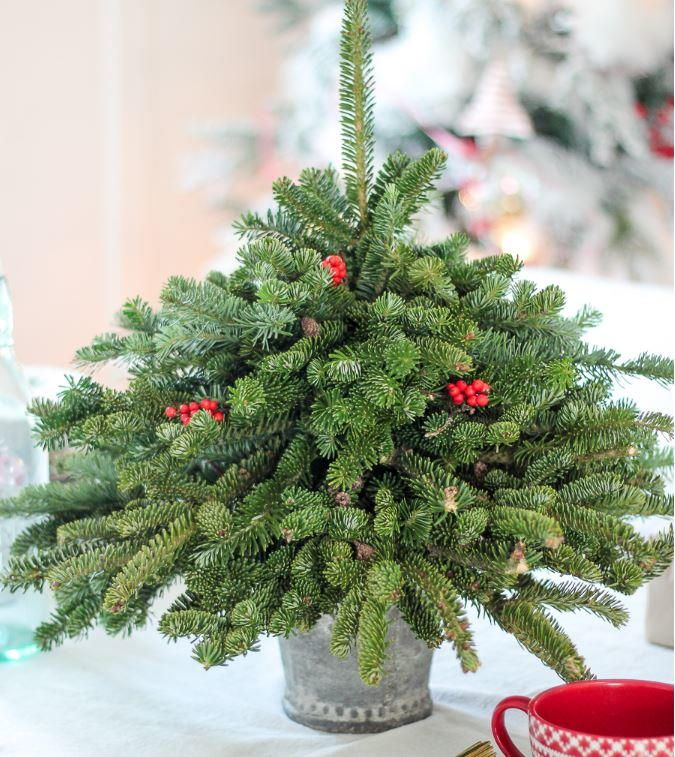 Don 39 T Toss Out Your Tree Trimmings This Year Instead Make Your Own Mini Tree With T Small Christmas Trees Christmas Tree Trimming Leftover Christmas Tree