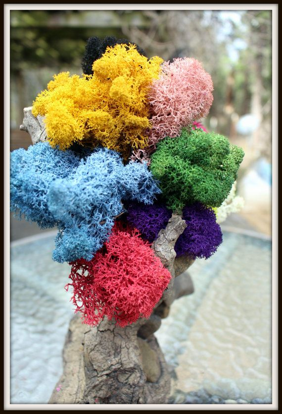 Reindeer moss-Get all 11 colors in 1 bag-11 oz bag by teresab123