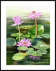 Three Pink Water Lilies With Pads Framed Print by Sharon Freeman