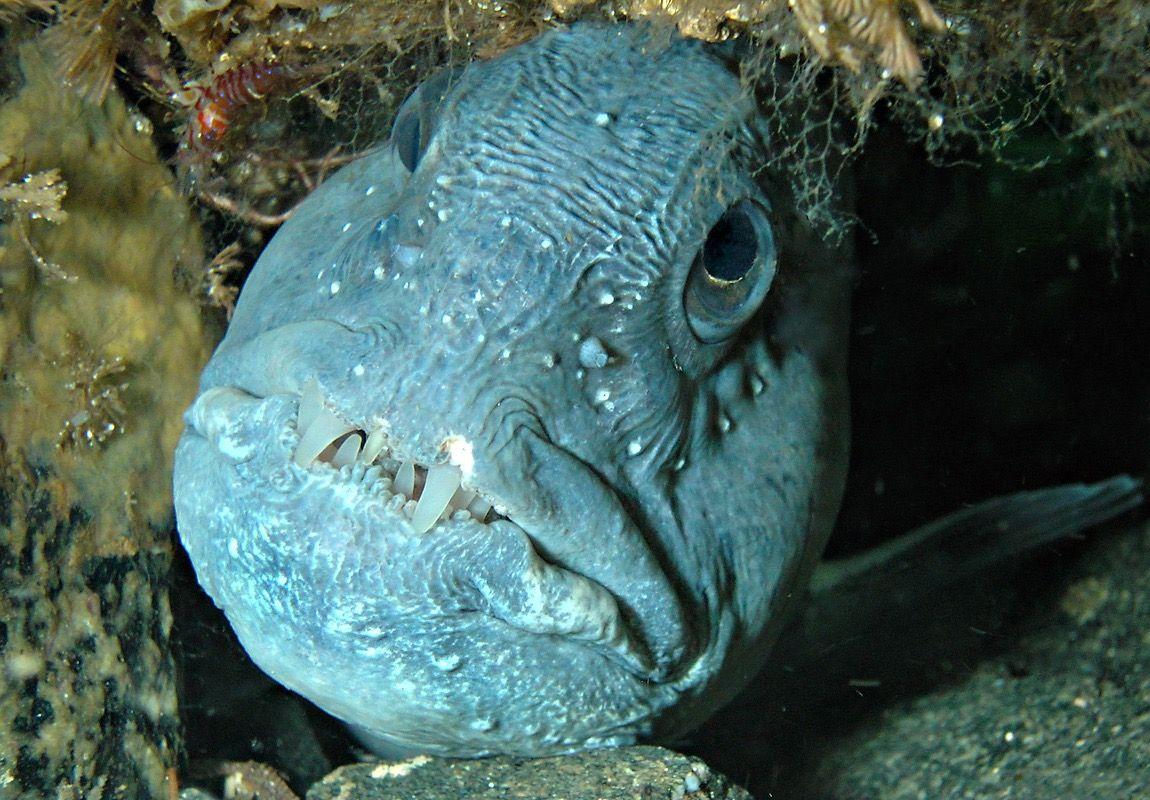 Pin On Aquatic Life
