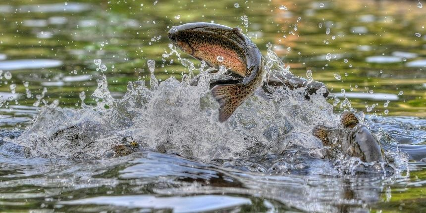 Trout Fishing Tips: How to Catch Trout [Fly Fishing Methods & More]