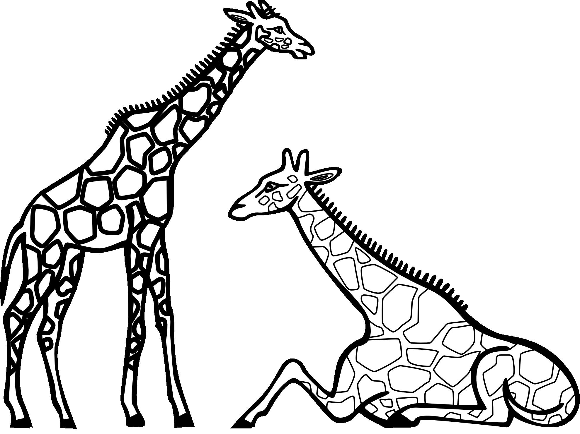 Pin By Ann Himelstieb On Giraffes