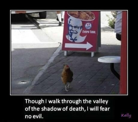 Unvirtuous Abbey On Twitter Funny Animals Funny Captions Funny Pictures
