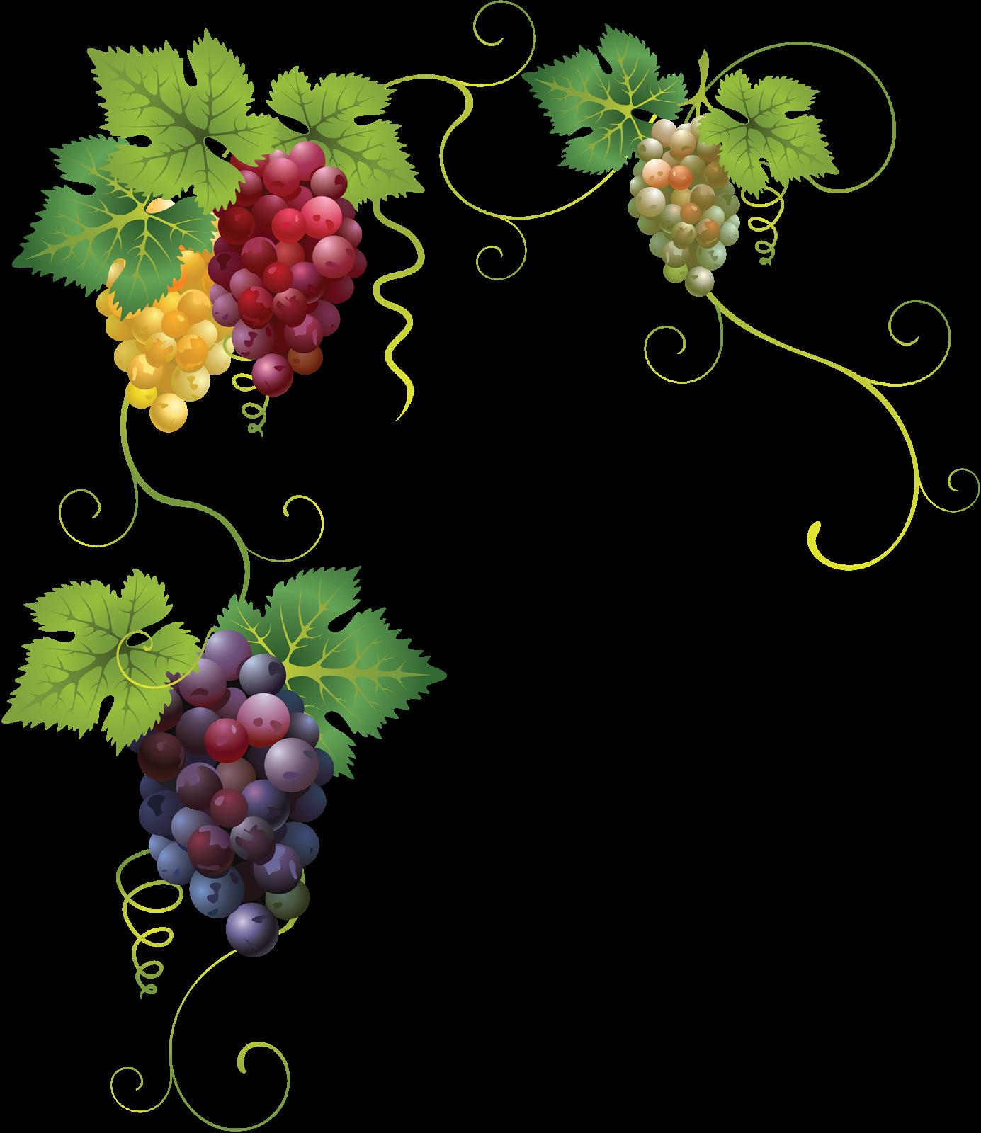 Виноградная лоза картинка для этикетки