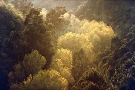River of Gold (© Ernst Haas)
