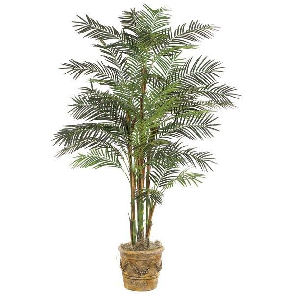 5 Indoor Plants That Absorb Humidity In Your House   Bamboo Palm, High  Humidity And Plants