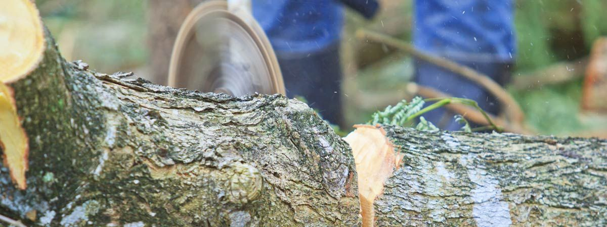 Image result for tree lopping and removal services