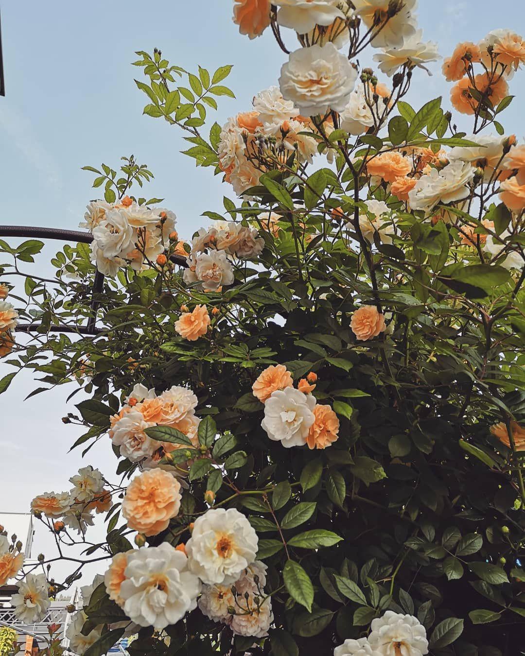 Wunsche Euch Einen Schonen Freitag Ihr Lieben Bei Uns Ist Es Veregnet Und Alles Grau Grau Richtiges Kuschelwetter Das Foto Von Meine Plants Painting Garden