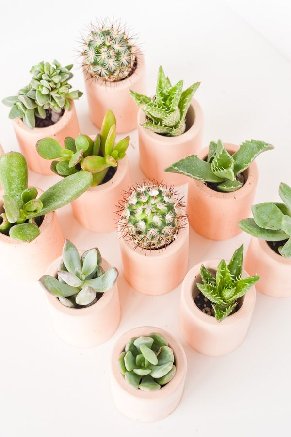 How to Make DIY Plaster Mini Planters