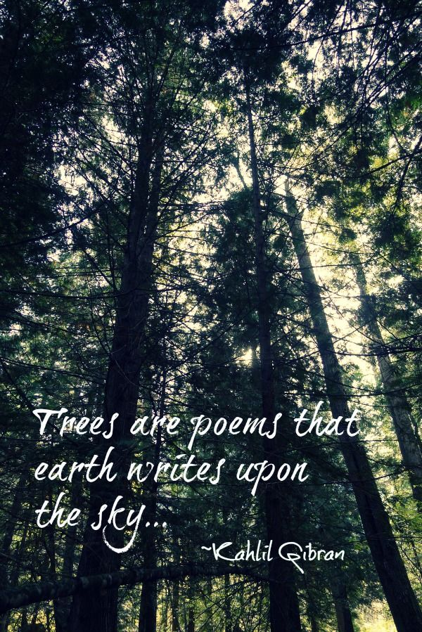 Trees are poems that earth writes upon the sky... ~Kahlil Gibran  Bliss Beyo...