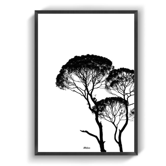 Crooked Trees Fotokunst Plakater Billeder
