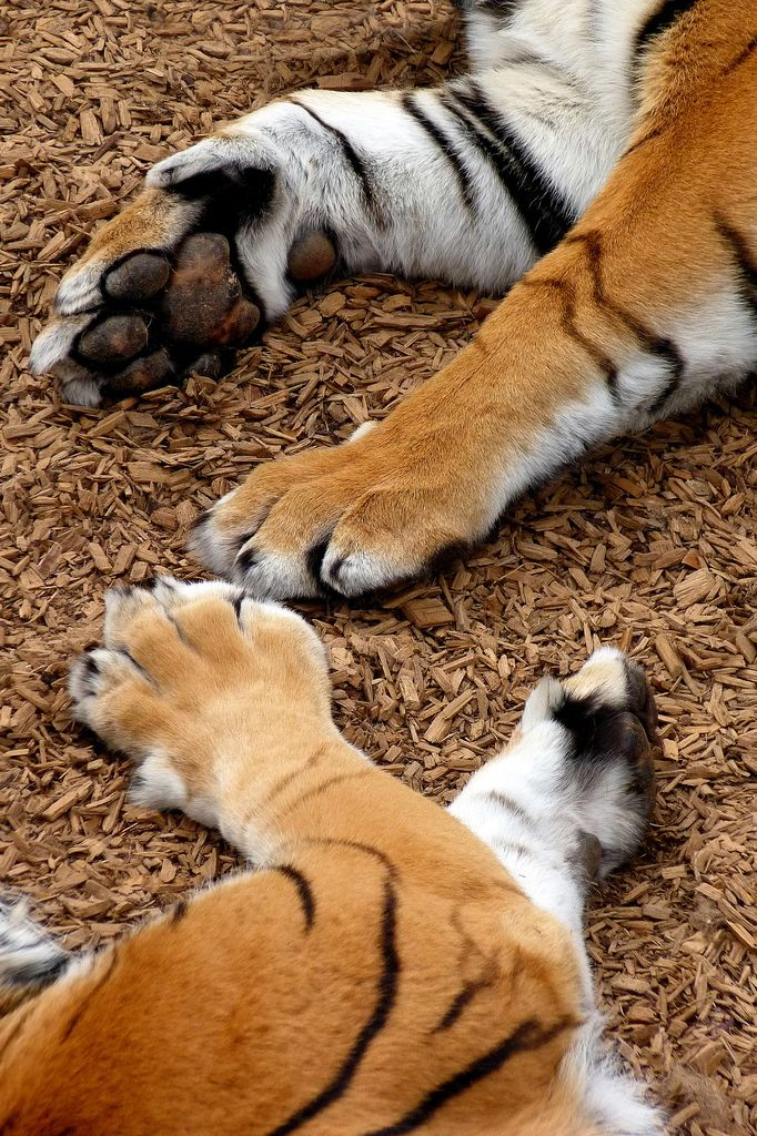 Show us your paws- handprint activity on poster board